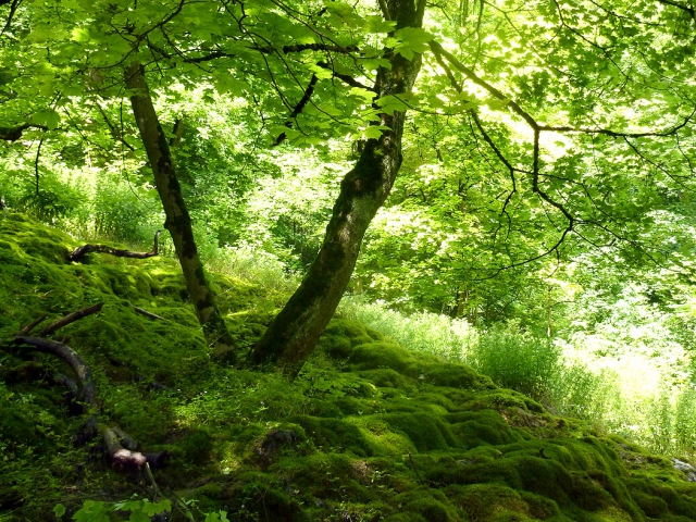 Verschiedene Waldmotiv zur Waldtherapie